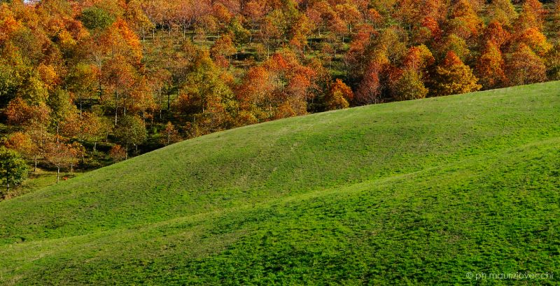 b_800_600_16777215_00_images_images_autunno2.jpg
